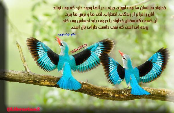 AZARBAD5